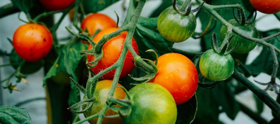 conseils pour jardiner en été et arroser les plantes avant de partir en vacances