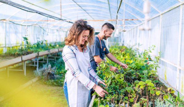 jardin potager d'entreprise hauts-de-seine, teambuilding