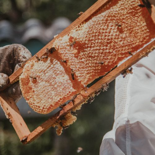 teambuilding eco-responsable apiculture